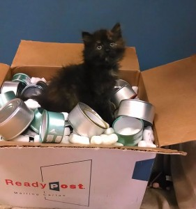 Cans for Pets 8